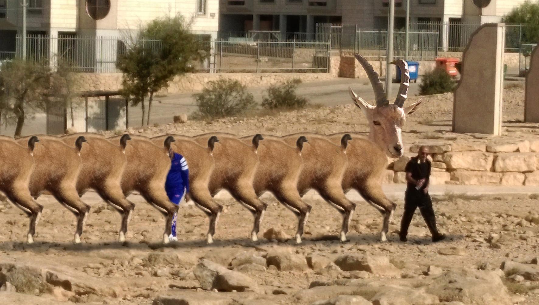ramon_deer